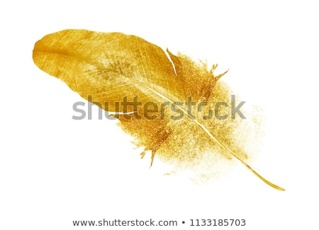 gold dove stock photo © blackmoon979