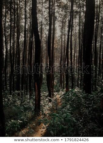 pine twig 06 stock photo © lianem