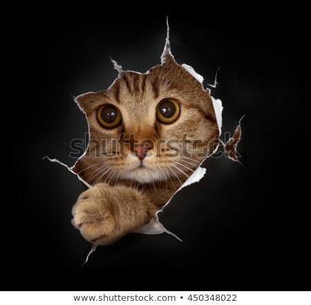 style · vecteur · animaux · affaires - photo stock © robuart