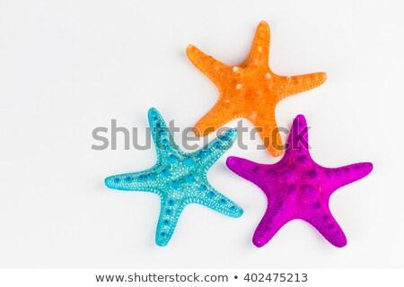 Deniz kabukları fishnet yaz tatili duvar Stok fotoğraf © Lana_M