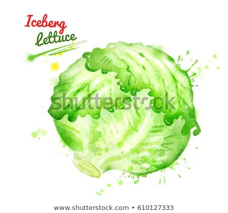 Watercolor illustration of iceberg lettuce Stock photo © Sonya_illustrations