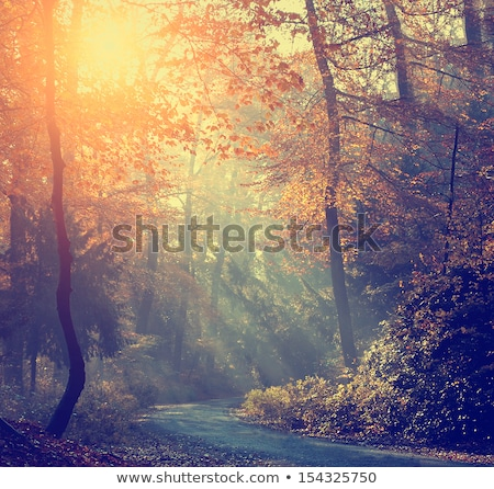 Fog in the forest. Tinted photo Stock photo © Kotenko