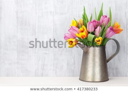 Friss színes tulipánok piros zöld levelek természet Stock fotó © vapi