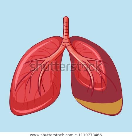 akciğer · kanseri · dev · büyüteç · kanser · doktor - stok fotoğraf © bluering