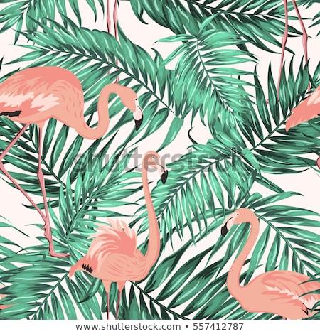 Hojas de palma flamenco naturales exótico hojas Foto stock © odina222