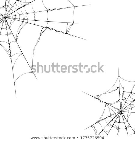 Spinnennetz zerrissen Rahmen isoliert weiß Design Stock foto © orensila