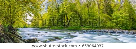 Schönen Stream Landschaft Illustration Himmel Gras Stock foto © bluering