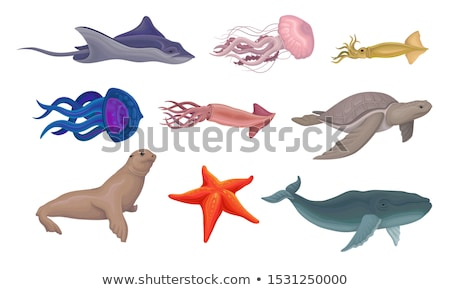 Aquático animais marinha mamíferos coleção mascote Foto stock © patrimonio