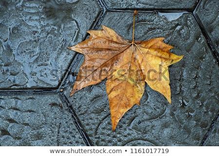 высушите листьев тротуар улице Барселона Сток-фото © nito