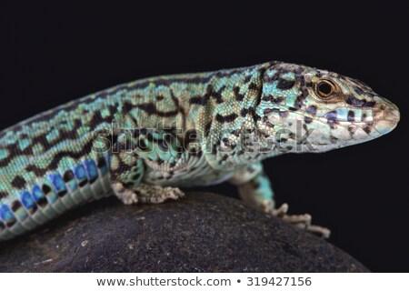 Jaszczurka oka charakter tle piękna zielone Zdjęcia stock © lunamarina