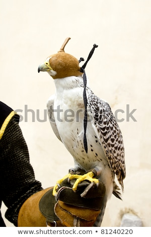 Falconeria falcon uccello guanto mano pelle Foto d'archivio © lunamarina
