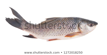 peces · árbol · blanco · vector · dibujo · colgante - foto stock © colematt