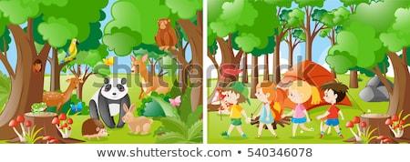 Panda джунгли сцена иллюстрация лес природы Сток-фото © bluering