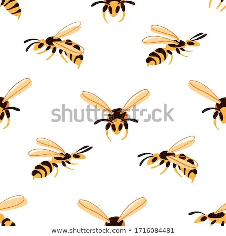 Wasp Flying Drawing Stock photo © patrimonio
