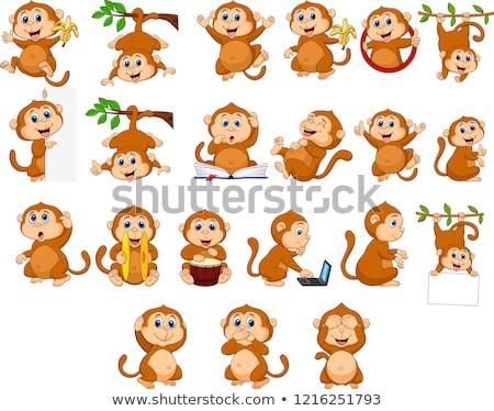 szett · majom · nevet · illusztráció · boldog · felirat - stock fotó © colematt