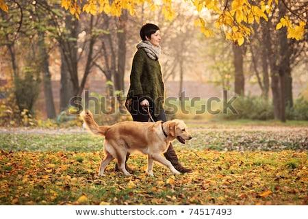 женщину ходьбе собака улице осень парка Сток-фото © monkey_business
