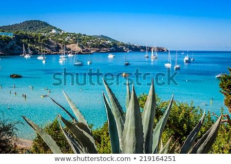 Ibiza Cala Tarida beach in Balearic Islands Stock photo © lunamarina