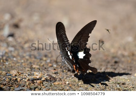 butterfly on the ground Stock photo © chrisroll