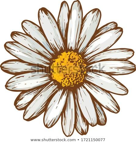 zachte · heldere · witte · Geel · ander · planten - stockfoto © bobkeenan