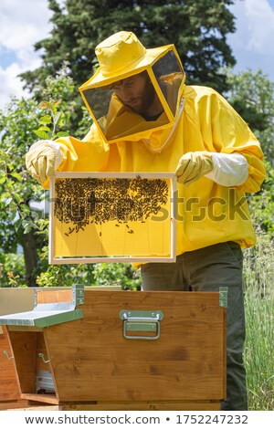sunny spring day biodiversity with bee Stock photo © sherjaca