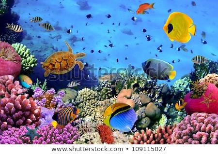 onderwater · zeegezicht · gouden · turkoois · textuur · gras - stockfoto © lypnyk2
