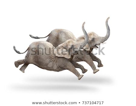 Africano animal grupo natureza África zebra Foto stock © xochicalco