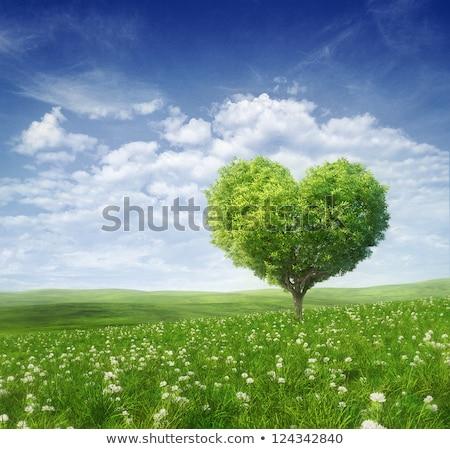 Fa szív alak szeretet terv égbolt fű Stock fotó © thecorner