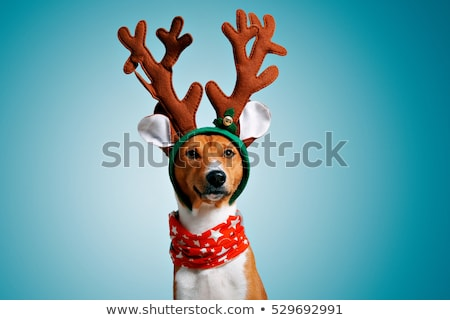 Doggy Santa with a Present Stock photo © LynneAlbright