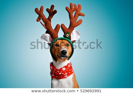 サンタクロース 現在 犬 ストックフォト © LynneAlbright