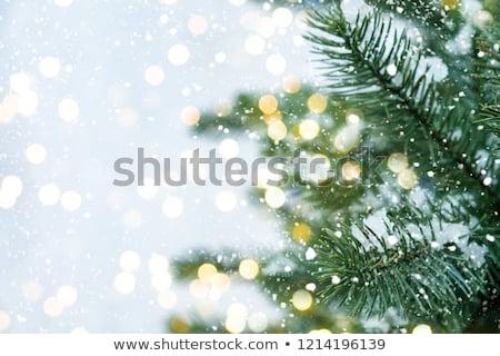 Fogo árvores neve céu azul floresta Foto stock © mariephoto