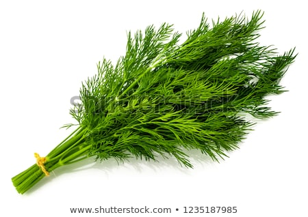 Dill. Stock photo © Leonardi