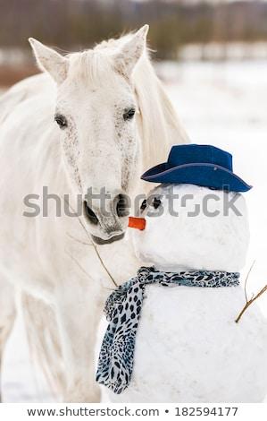 Cheval blanc manger neige couvert cadre Photo stock © rogerashford