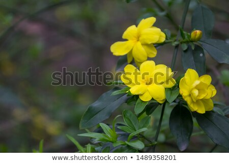 Chinese garden yellow flowers Sichuan China Stock photo © billperry