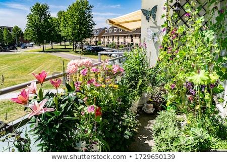 terasz · természet · égbolt · tavasz · fű · tájkép - stock fotó © tannjuska