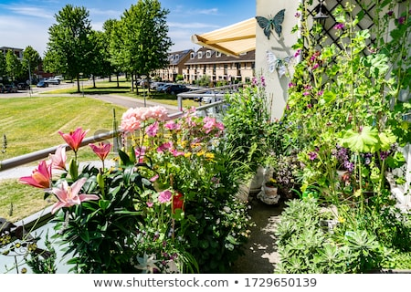 Ensoleillée terrasse fleurs nature été Photo stock © tannjuska