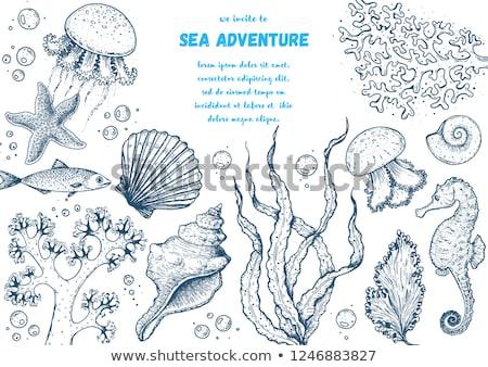 onderwater · wereld · zee · verschillend · soorten · vis - stockfoto © carodi
