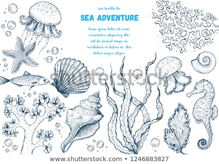 Underwater world card  with starfish, vector illustration Stock photo © carodi