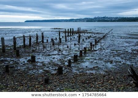Marine rock on docks, barnacle Stock photo © lunamarina