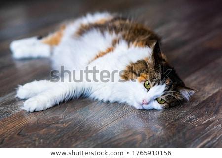 Cute · ленивый · красный · кошки · весело · расслабиться - Сток-фото © ryhor