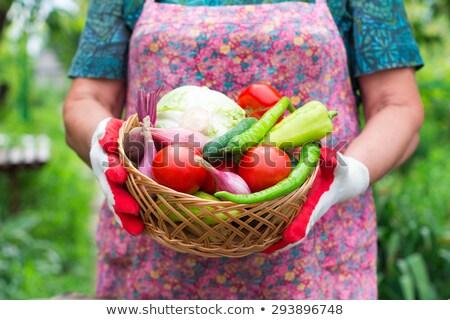 méconnaissable · femme · panier · plein · légumes - photo stock © hasloo