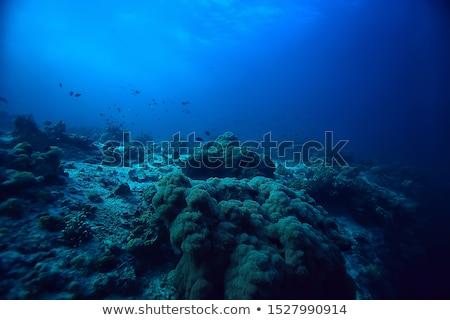 algae underwater world  Stock photo © OleksandrO
