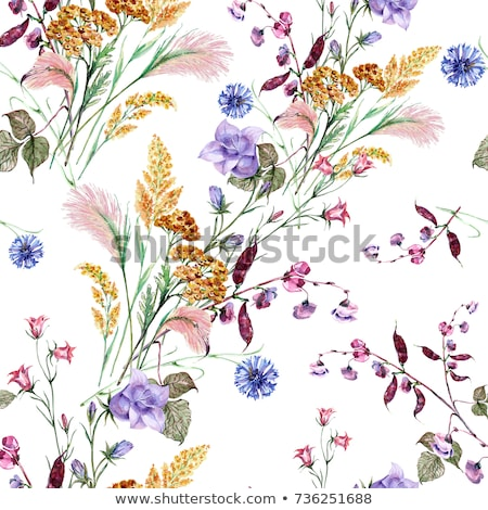 Flowering wild ornamental grass Stock photo © juniart