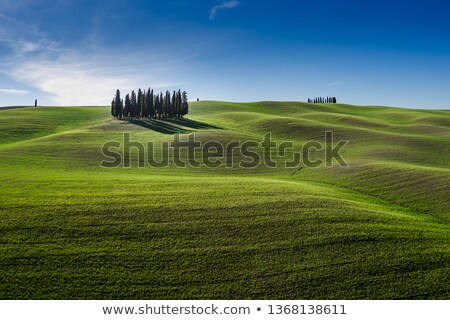 Tuscan cypress tree Stock photo © deyangeorgiev