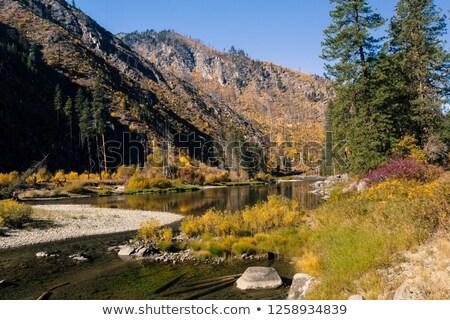 осень · клен · листьев · кедр · ручей · мох - Сток-фото © billperry