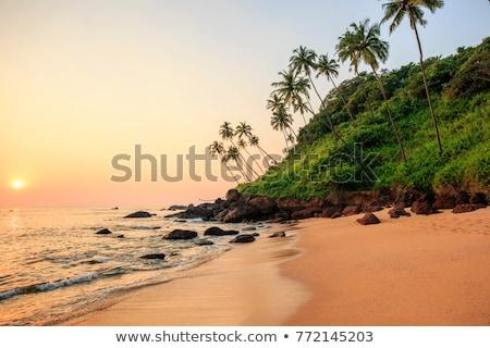 plaj · Hindistan · güney · gökyüzü · ağaç - stok fotoğraf © mcherevan