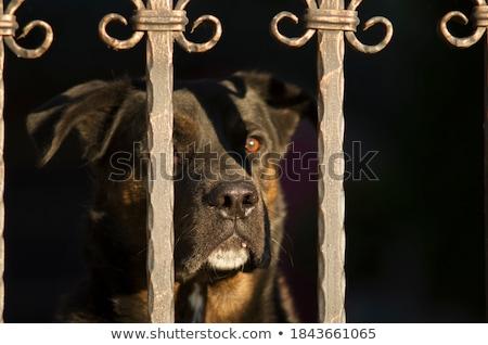 Chien de garde illustration chien signe drôle clôture Photo stock © adrenalina