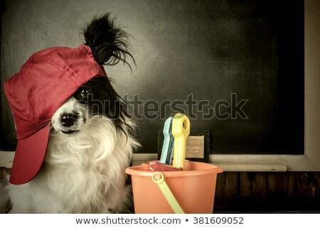 Perro maestro estudiante pensando vacaciones escuela Foto stock © marimorena