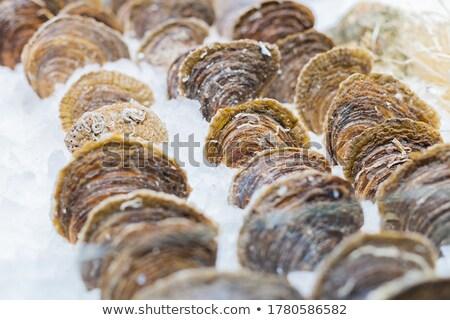 peixe · frutos · do · mar · gelo · cavala · natureza · mar - foto stock © elxeneize