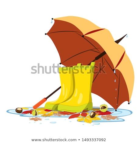 Sündisznó víz pocsolya színes rajz illusztráció Stock fotó © derocz