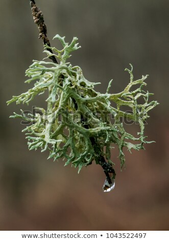 primer · plano · frágil · musgo · primavera · sol · campo - foto stock © kb-photodesign